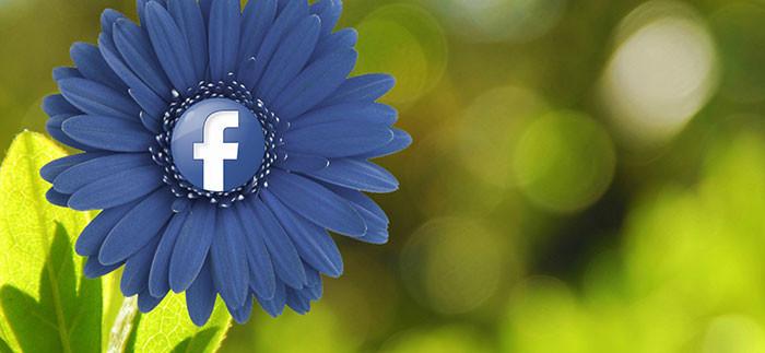 5 dôvodov, ako Facebook vplýva na vašu produktivitu